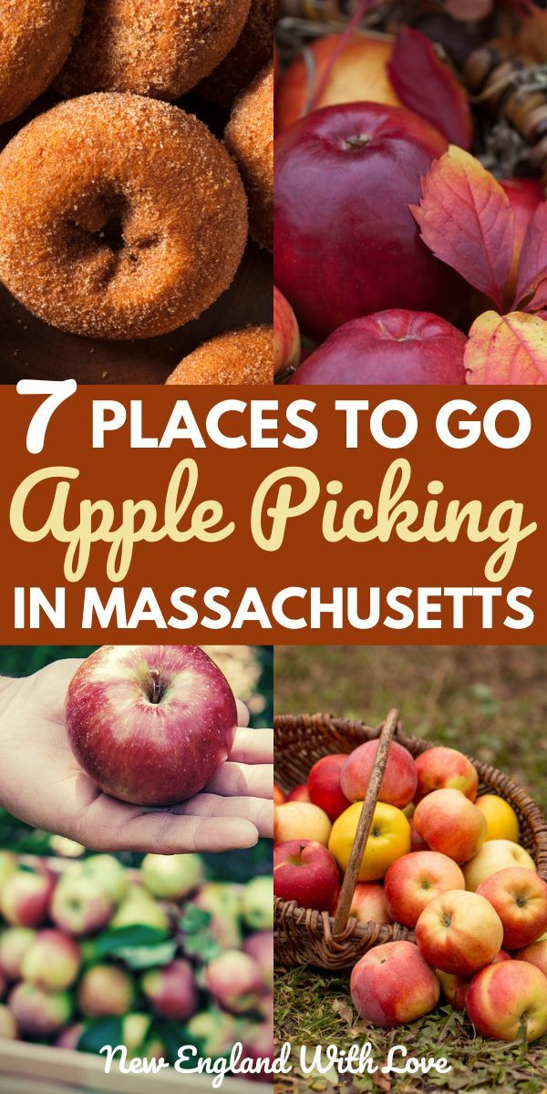 7 Great Places To Go Apple Picking In Massachusetts In 2020 Apple Picking Maine In The Fall New England Fall