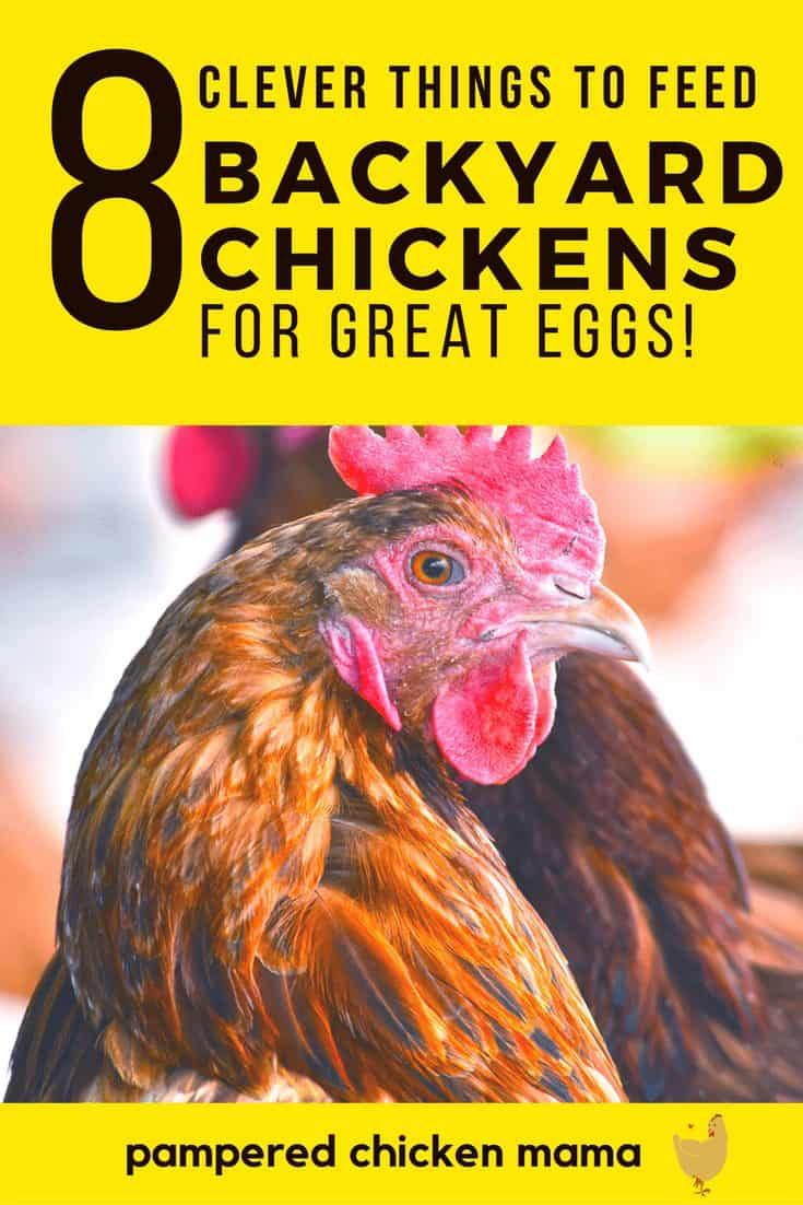 What to Feed your Chickens for Better Tasting Eggs (With ...
