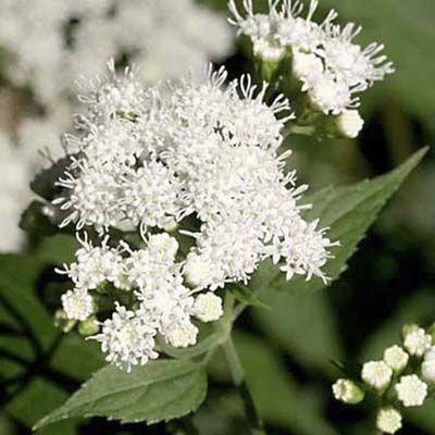 7 fall blooming perennials - Fall blooming flowers ...