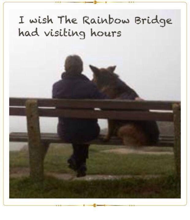 I wish rainbow bridge had visiting hours Mijn stijl