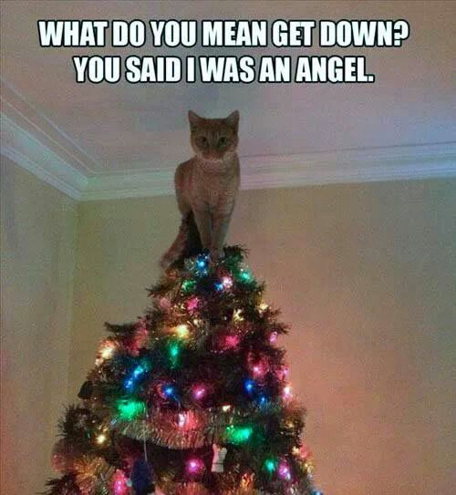 Image result for blessings for ill cat