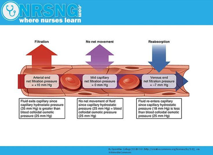 Hydrostatic vs Oncotic Pressure | Osmosis, albumin, fluid management, edema