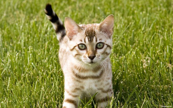 обои Полосатый котенок на природе фото