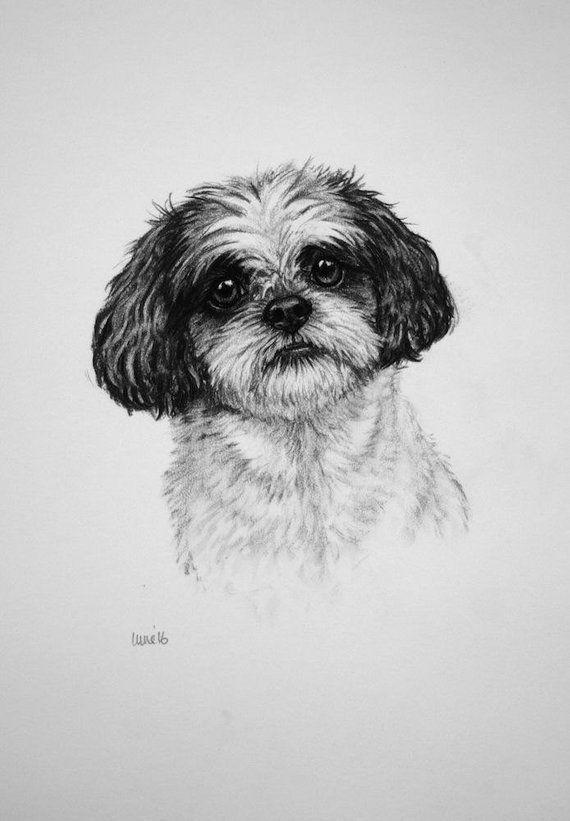 Shih Tzu Dog Art Print Dog Print Dog Lover Gift Toy Dog