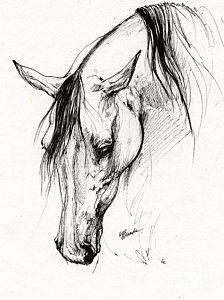 Arabian Horse Ink Drawing 6 Print by Angel  Tarantella