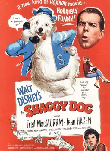 The Shaggy Dog (1959 ) - black and white Walt Disney film about Wilby Daniels, a teenager who by the power of an enchanted ring of the Borgias is transformed into a shaggy Old English Sheepdog. The film was very loosely based on the story, The Hound of Florence by Felix Salten. It is directed by Charles Barton and stars Fred MacMurray, Tommy Kirk, Jean Hagen, Kevin Corcoran, Tim Considine, Roberta Shore, and Annette Funicello. It was the first ever Walt Disney live-action comedy.