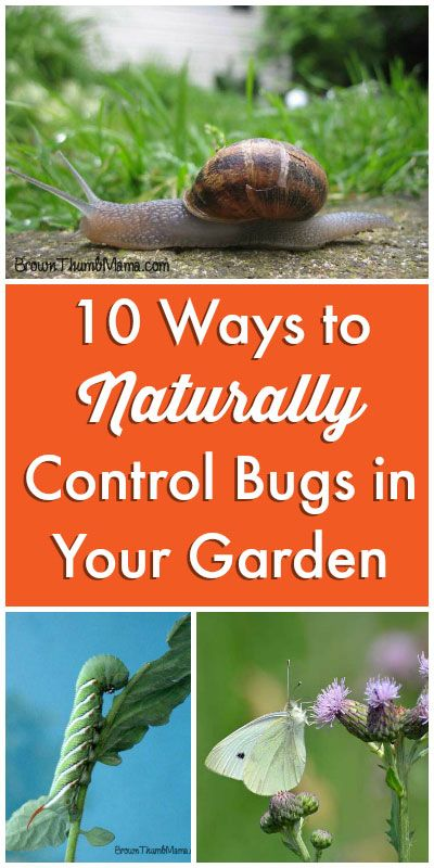 10 Ways to Naturally Control Bugs in Your Garden: BrownThumbMama.com