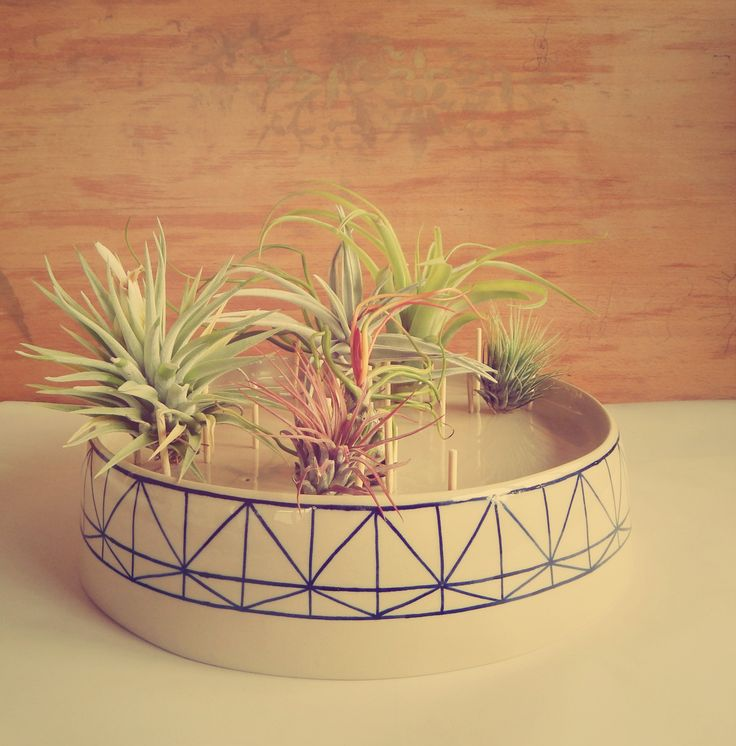 Aerium experiment with ceramics. Lovely airplants too. https://www.etsy.com/shop/Aerium www.facebook.com/aerium.ro