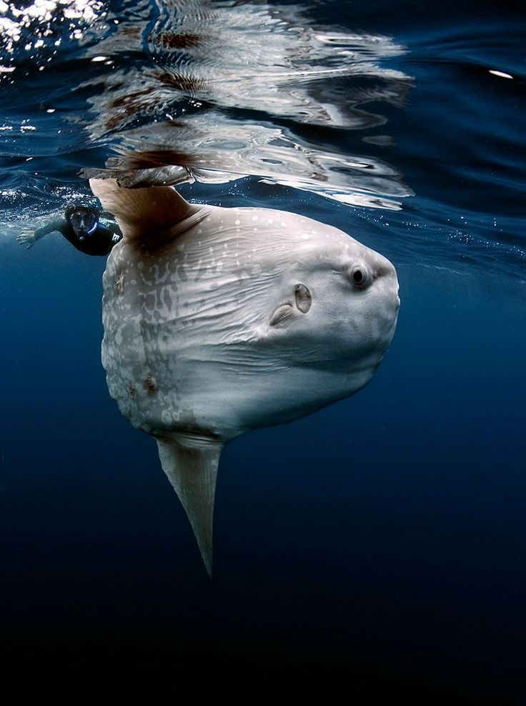 Criatura marina 'extraterrestre' se hace famosa en internet