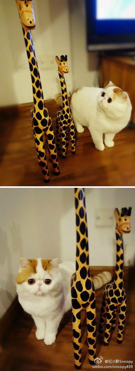 Because giraffes just make the best friends ;)