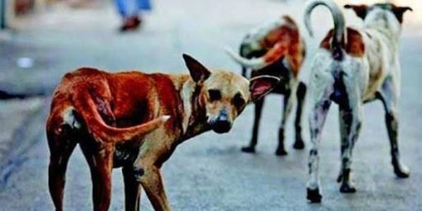 Kerala to put an end to the killing of stray dogs! > http://www.thepetitionsite.com/takeaction/958/245/772/