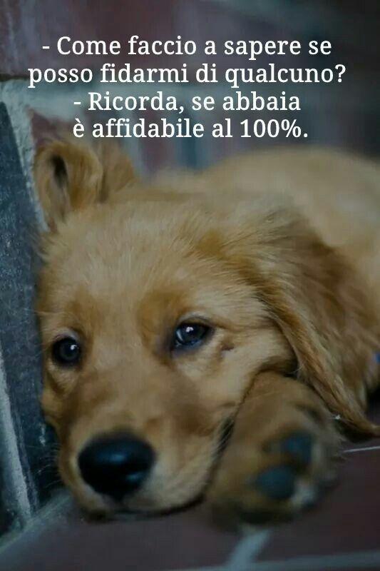 Favoloso Oltre 25 fantastiche idee su Citazioni sui cani su Pinterest  BC19