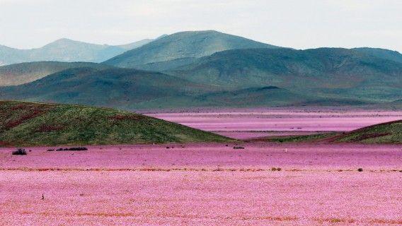 Atacama in Chile