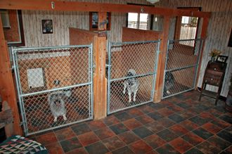 Commercial Dog Kennels Inside | Lobo Lodge Interior Kennel