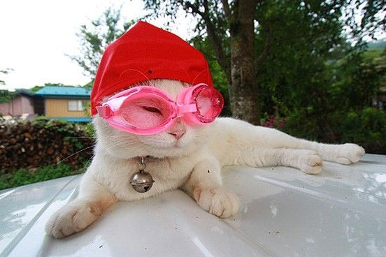 I Is Ready For Summer Cats Are Cute Pinterest Swim