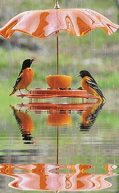Breakfast in the rain!