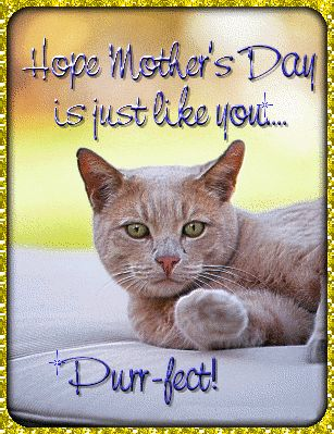 29 best catsmotherfather day images on pinterest kittens kitty you are the cats meow have a purrrrrfectly marvelous birthday sciox Gallery