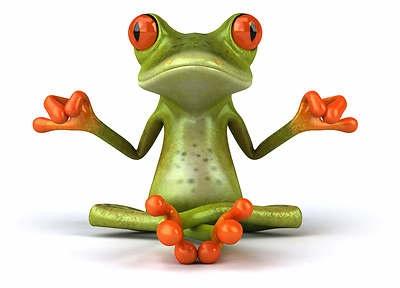 Frog 8 x 10 Glossy Photo Picture Image 4   eBayRhonda Pearson