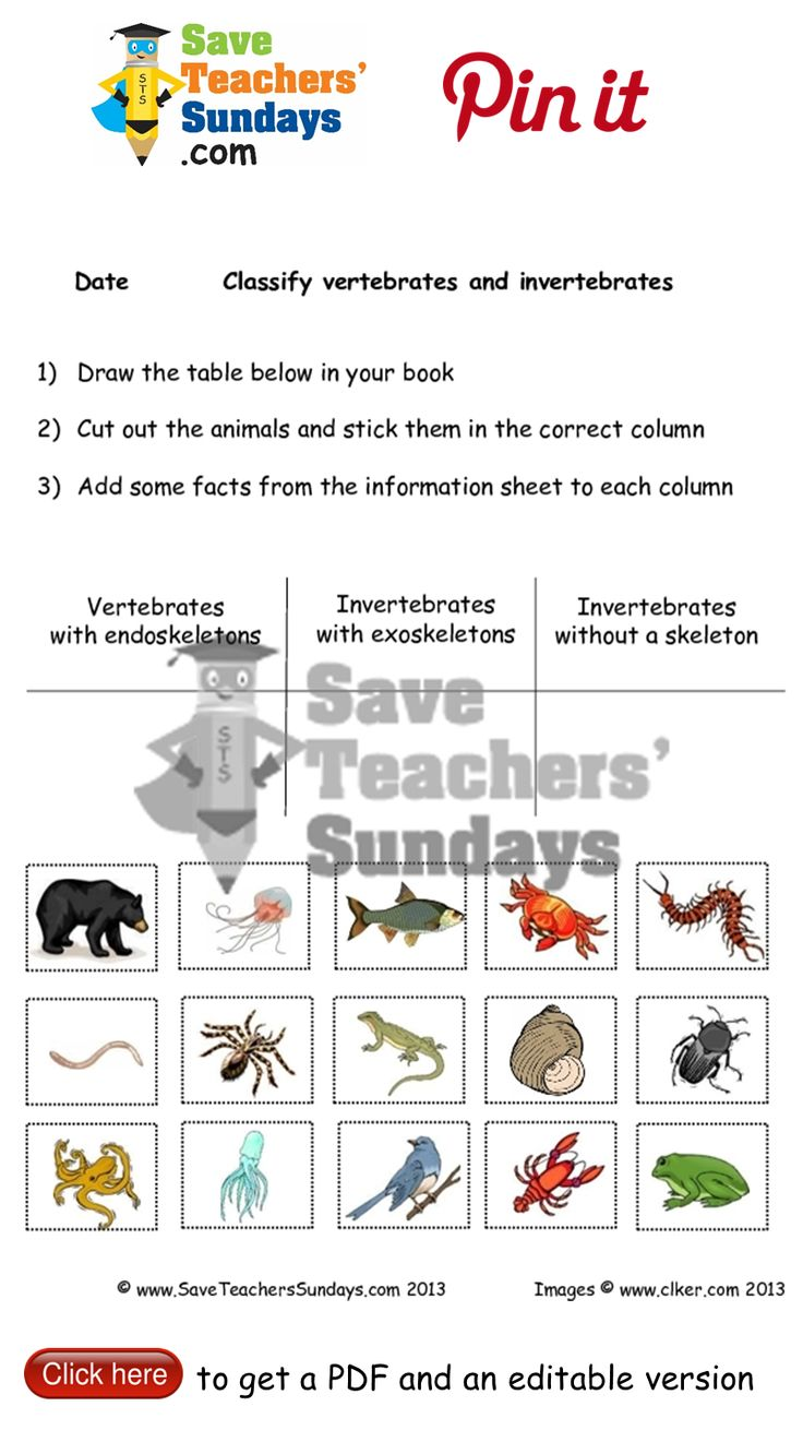 Animals with skeletons and without skeletons worksheet. Go to http://www.saveteacherssundays.com/science/year-3/327/lesson-7-animals-and-their-skeletons/ to download this Animals with skeletons and without skeletons worksheet. #SaveTeachersSundaysUK