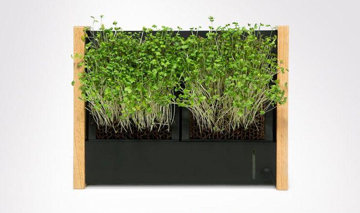 EcoQube Frame est un jardin verticale sous la forme d'un cadre, qui vous permet de faire pousser vos aromates ou de jolies succulentes.