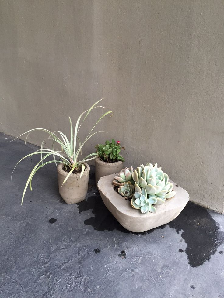 CONCRETE FLOWER POTS - MADE FROM USING YOGURT CONTAINERS AND PLASTIC BOWL