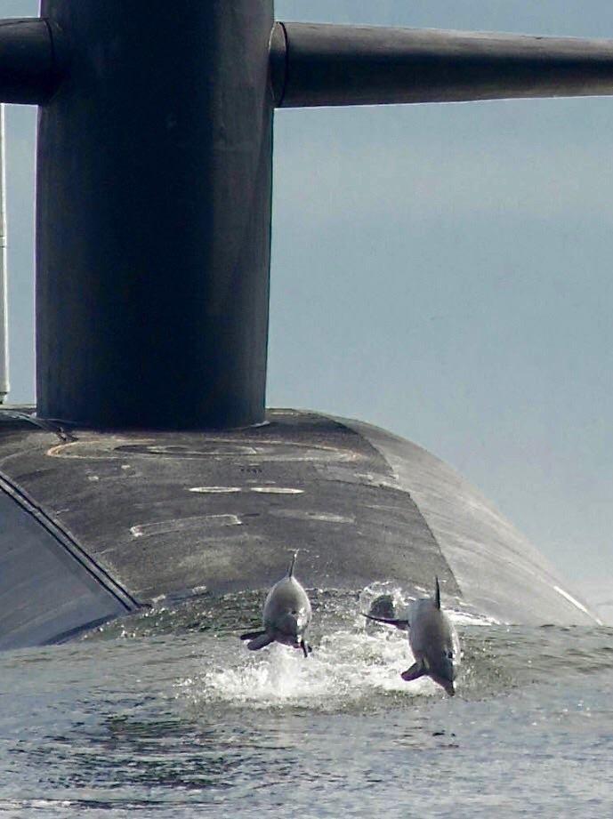 Dolphins having fun with submarine