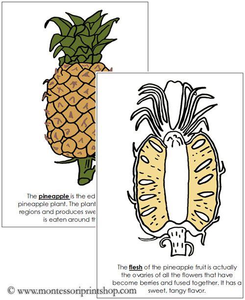 Pineapple Nomenclature