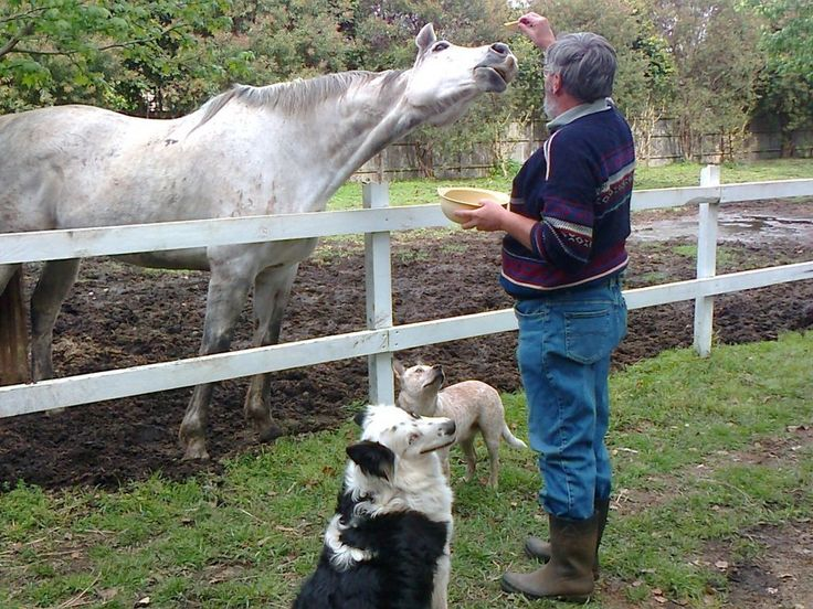 Yes we can care for farm animals as well as domestic - Carol's Contented Critters, PetCare, Currumbin Waters, QLD, 4223 - TrueLocal
