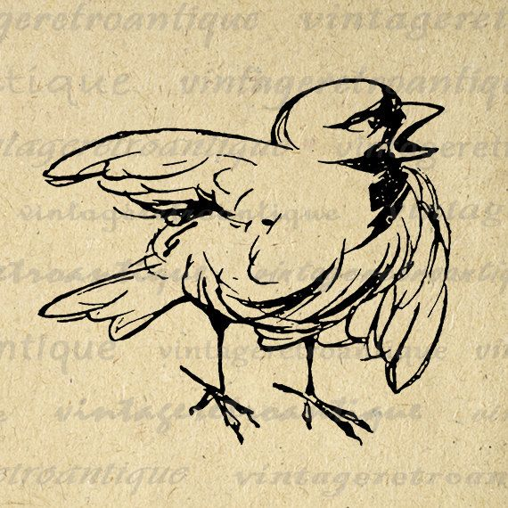 Little Bird Image Printable Digital Download Cartoon Artwork Graphic Antique Clip Art Jpg Png Eps 18x18 HQ 300dpi No.2900 @ vintageretroantique.etsy.com