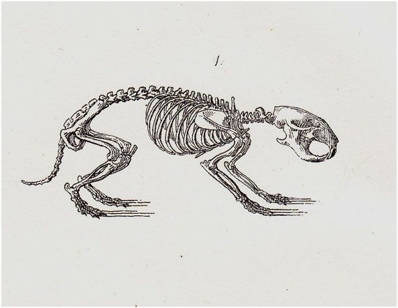 скелет хомяка картинки уйти по-английски