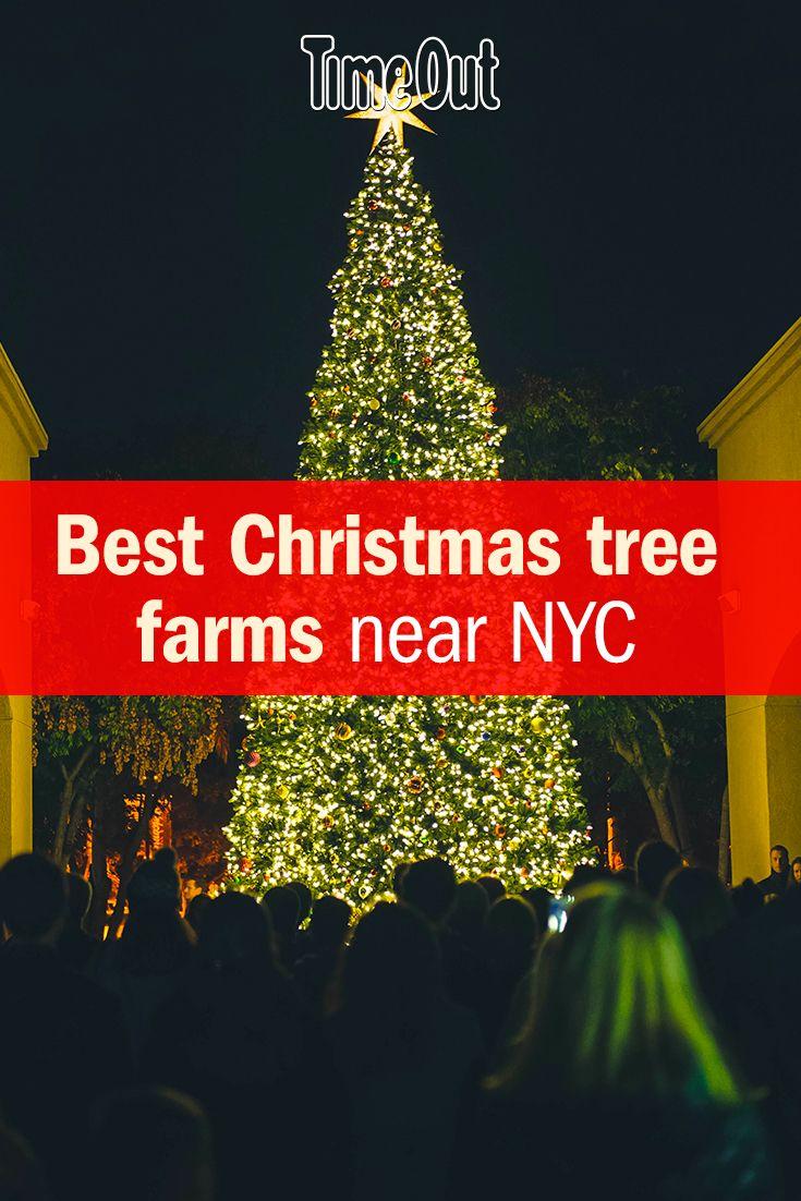 The Best Christmas Tree Farm Locations Near Nyc Cool Christmas Trees Christmas Tree Christmas Tree Farm