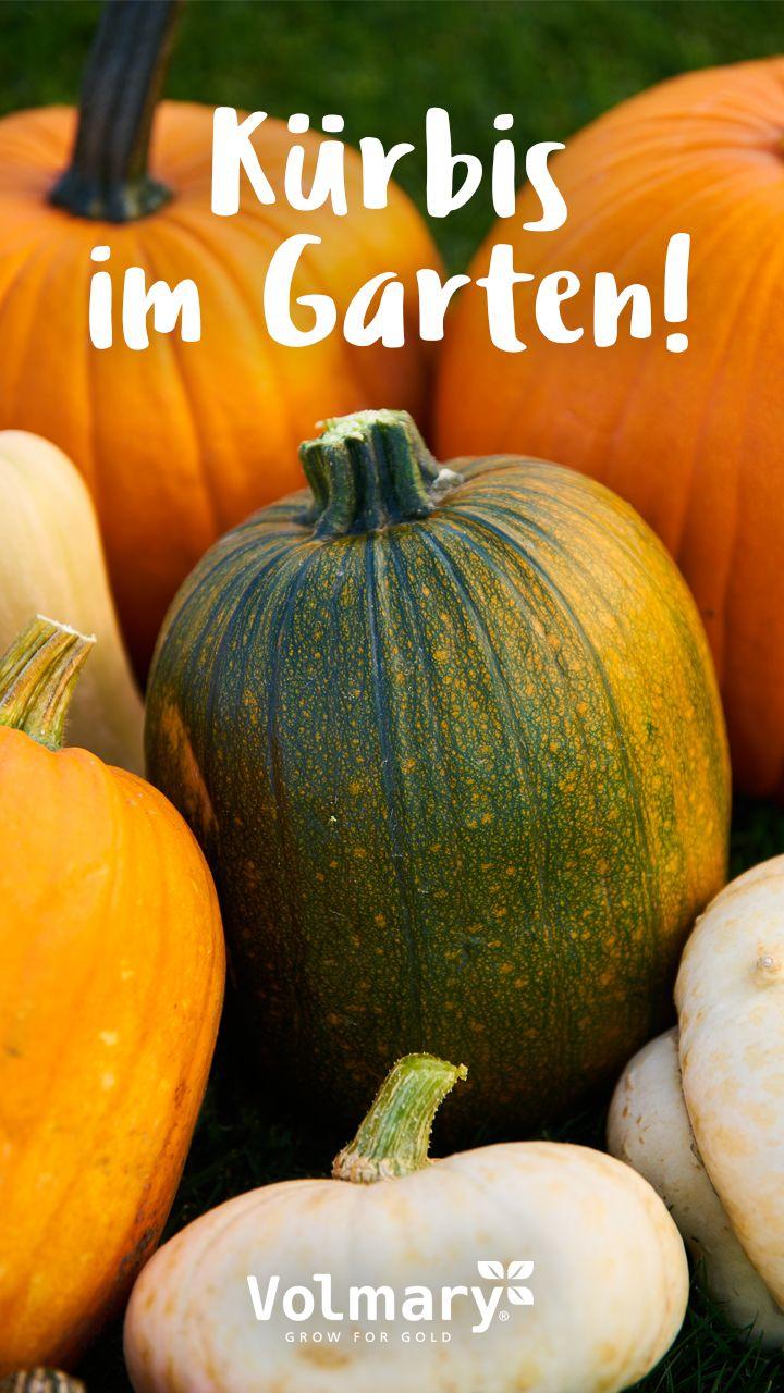 Herbstzeit Ist Kurbiszeit Tipps Und Infos Plant Happy Kurbis Pflanzen Gartenarbeit Obstgeholze