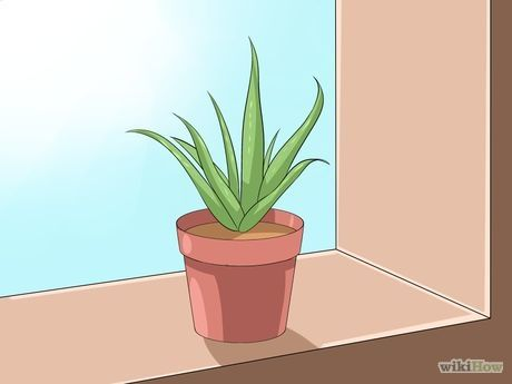 Image intitulée Care for Your Aloe Vera Plant Step 1