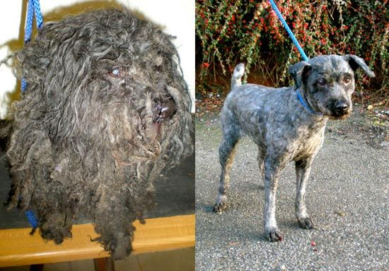 Διάσωση ζώων: Πριν και μετά