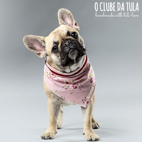 We love your neck... #romantic Dots & Flowers #scarf by O Clube da Tula. Photo: @whom.creativestudio #scarves for #dogs #scarf for #dogstagram #dogshow #dogslover #dogs #fashion #fashionista #bandana #galgo #galgos #greyhound #greyhoundlove #pitbull #labrador #bulldog #bulldogfrances #bulldogingles #bulldogs #bulldoglife #bulldoglove #bulldogram #bulldogpuppy #bulldogsofig