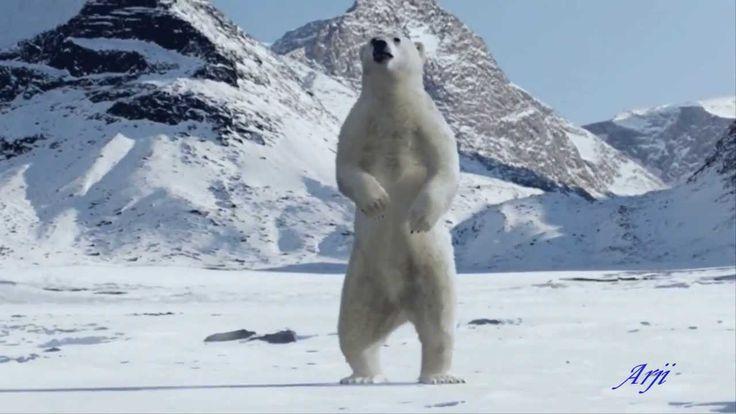 Plongee dans le Pole Nord