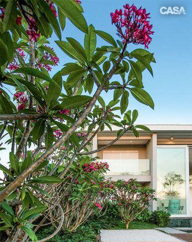 Pés de jasmim-manga (Plumeria rubra) e suas delicadas flores se destacam ao redor da piscina.