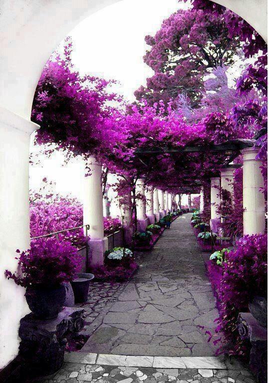 Vacation #travel spots: Purple flowered walkway.  House of Axel Munthe, Capri, Italy