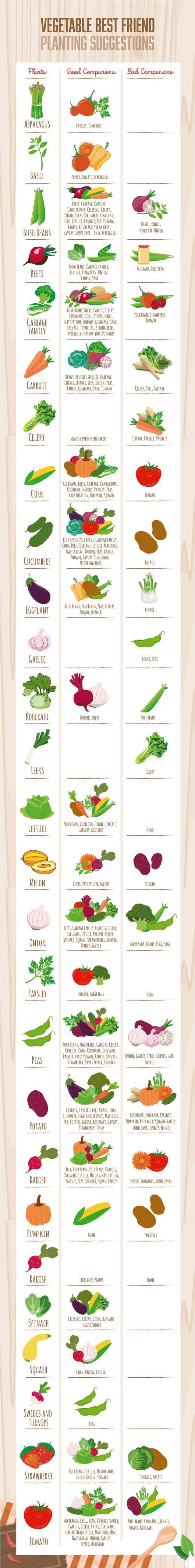 Gardening expert Vicki Joseph's companion planting chart should be a must-have for any gardener who's not sure what veggies should be planted together.