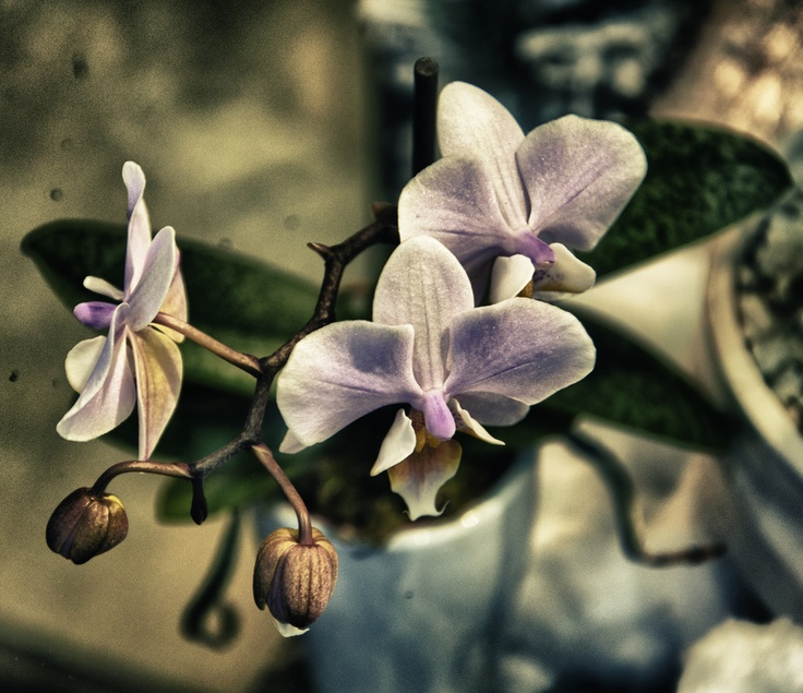 The secret language of flowers !