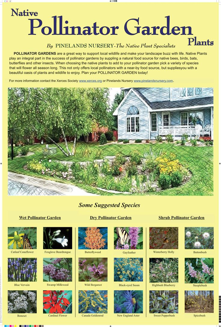 1000 Images About New Jersey Native Plants On Pinterest