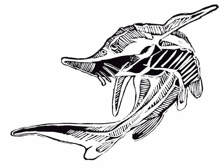 Acipenser ruthenus - fish, technique lino
