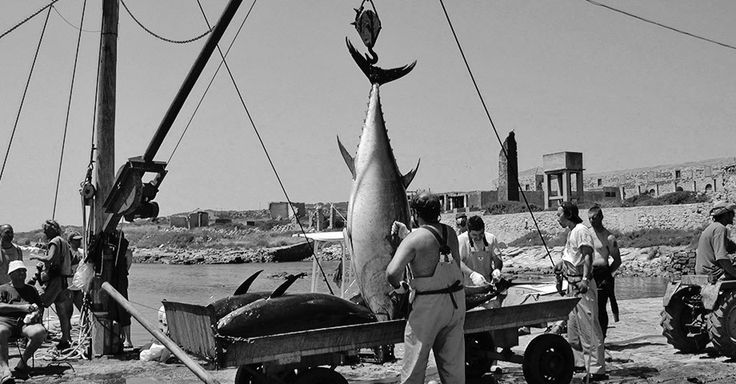 End of May, early June is the traditional tuna fishing festival. The right moment to get to know the tuna specialties