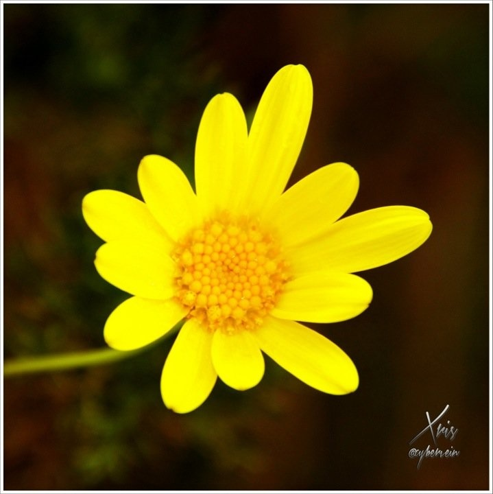 Streamzoo photo - Flower Macro