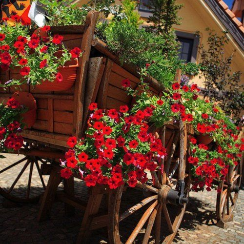 Wagon of petunias