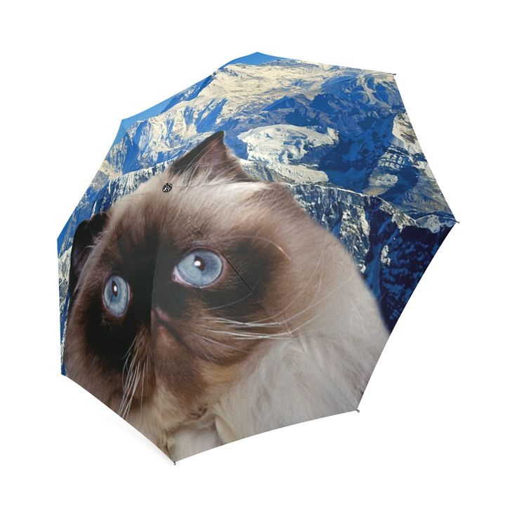 Himalayan Cat Foldable Umbrella. FREE Shipping.  #erikakaisersot #artsadd #umbrellas  #cats