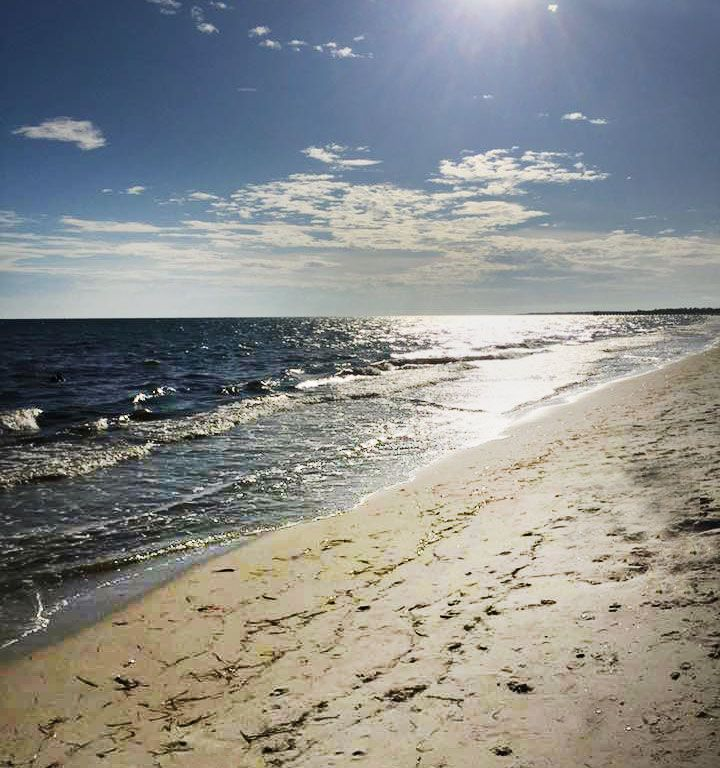Mexico Beach: A Small Florida Town With a Big Heart for Ocean Reef Conservation