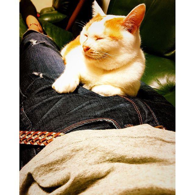 久々に実家に帰って寝てたらこれ。 Milkyさんが上に乗ってたやつ。笑 #猫 #猫と寝ると暑い #寝苦しい #抜け毛の時期 #デニムに毛が付くのダルい #でも可愛いから許してしまう #愛猫 #Milkyさん