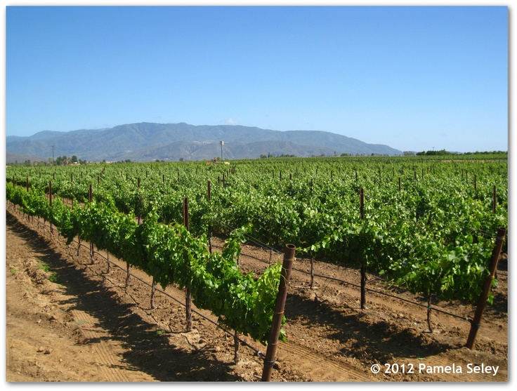 17 Best Images About Napa Valley Wine Country On Pinterest