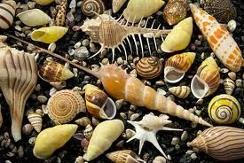 shell collection